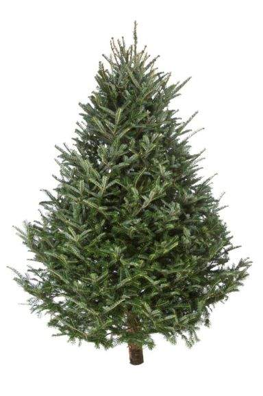 385f40cebc43 Christmas Tree Deals ⇒ Cheap price, best Sale in UK - hotukdeals
