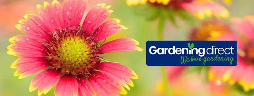 gardening direct-gallery