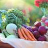 Vegetables Deals