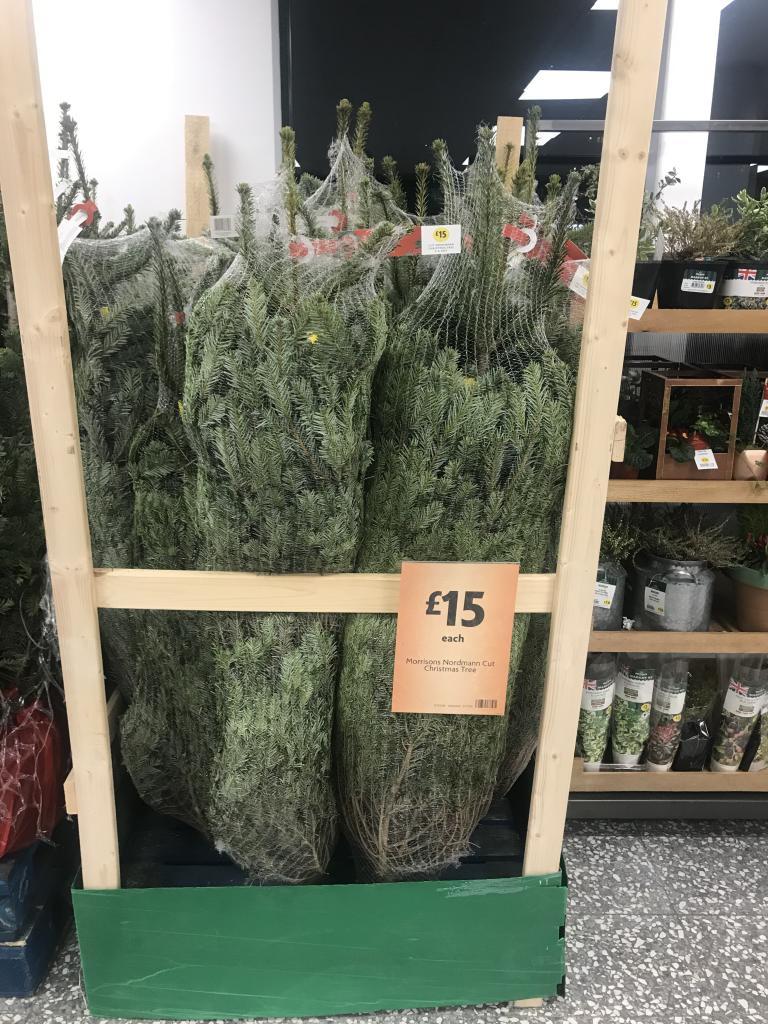 3120237-ubyG9.jpg - 15 For Real Christmas Tree Instore @ Morrisons - Hotukdeals