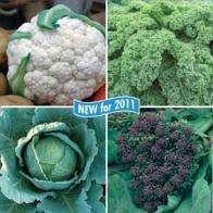 Half price veggie plants @ Mr Fothergills 20 plants for £7.42 (£3.47  & £3.95 p&p)