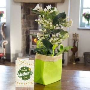 Mothers Day Plants from £11.92 delivered on Sunday 30th from iFlorist
