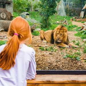 Zootastic Sleepovers @ Chessington - 1 Night in Resort Hotel + entry to ZOO & SEA LIFE centre + Lots More from £99 for a family of  4