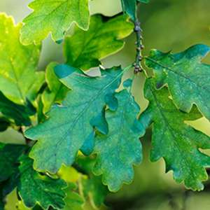 Free Trees for Schools & Community Groups @ The Woodland Trust