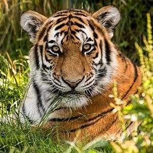 Blackpool Zoo up to 25% off Memberships