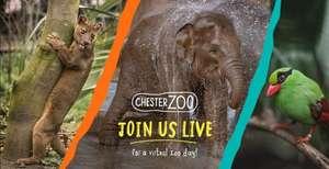 Chester Zoo Live Virtual Tour 24/04/2020