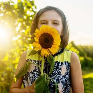 Free packet of Sunflower soleil Seeds - £1.99 delivery (10,000 packets available)