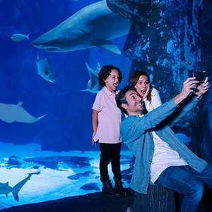 SEA LIFE London Aquarium family of 4 ticket - £55 at Picniq Tickets