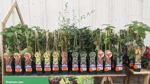 Fruit bushes instore were £8.00 now £4.00 @ Homebase (Craigleith)