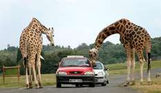 FREE ENTRY to West Midland Safari Park on 6th November