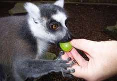 Meet Monkeys! at Paradise Wildlife Park Hertfordshire for two people with cream tea, only £41.19!!