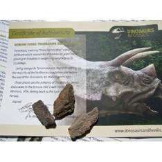 GENUINE Fossil DINOSAUR BONE from Fulfilled Amazon £5.99 free delivery