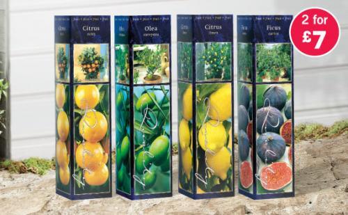 Lemon, Orange, Fig, Olive Trees, 2 for £7.00 at Lidl
