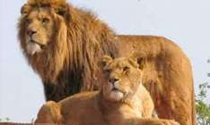 Half Price Family Ticket to Southlakes Wild Animal Park, Cumbria Only £24 Use In School Hols with Radio Borders