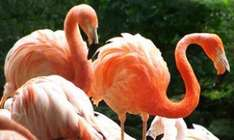FLAMINGOLAND Half Price Family Ticket Only £55 Was £110 Valid School Hols with Forth Radio or Clyde Radio