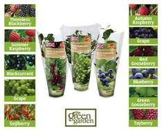 10 Fruit Collections in 9cm pot from 7th £1.79 at ALDI each