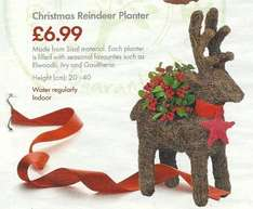 Christmas Reindeer Planter - £6.99 - LIDL - Thurs 18th December - Already in some LIDL stores - With sleigh option for £9.99