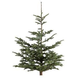 B&Q All real XMAS trees £10
