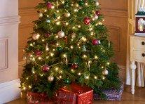 £1 Real Christmas Tree's @ B&M
