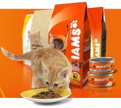 Iams Pro Active dry cat food £2.49 1kg bag Home Bargains