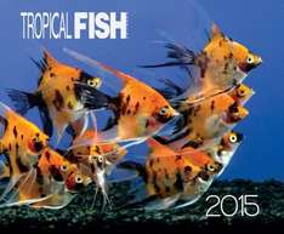 Free tropical fish hobbyist calendar 2015