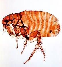 Flea /Natural Pest Control / Red Mite Powder (DE) - £2.50 @ djcrit eBay :like Frontline Spot On Treatment