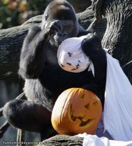 Free Entry on October 31st 2016 for All Children in Full Halloween Fancy Dress at Monkey World