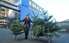 Ikea Real Xmas Trees Back in Ikea Southampton £25 with £20 Voucher Back