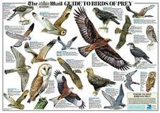This weekend get your giant, glossy RSPB garden birds wallchart, FREE inside The Mail on Sunday.
