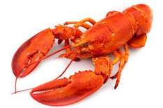 Whole lobster £2.99 Saturday only @ lidl instore