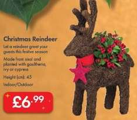Christmas Reindeer Planter £6.99 - Reindeer with Sleigh £9.99 - LIDL