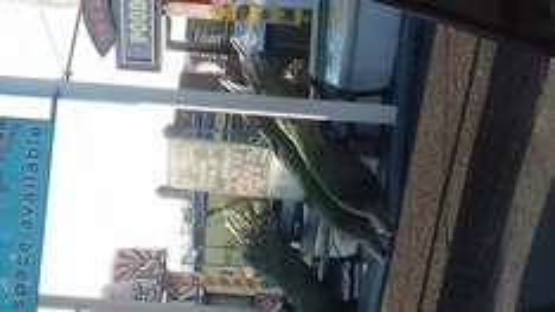REAL 6FT SPRUCE XMAS TREES £5 @ Mannings Amusements Felixstowe