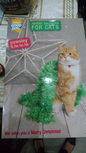 cats advent calendar 10p in sainsbury's instore -  Streatham Common