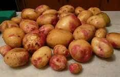Morrisons King Edwards Wonky Potatoes 2.5kg £1.12