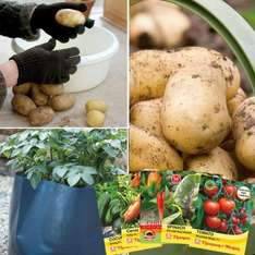 FREE* Potato Charlotte Growing Kit - Worth £22.76, just pay £5.65 p&p - Thompson & Morgan