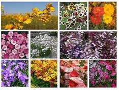 Cottage Garden Flower Seed Collection x 10 packets £3.95 with code @.park-promotions