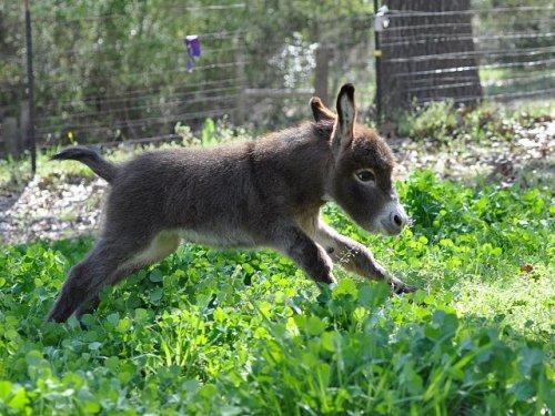 Free Entry to The Donkey Sanctuary Sidmouth ( + Manchester / Leeds / Birmingham / Belfast / Derbyshire / Ivybridge / Spain / Italy / Ireland)