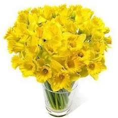 20 daffodils 95p (Valentines gift) @ Lidl