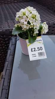 Asda Mini Novelty Flower Pot Reduced Now 62p in store
