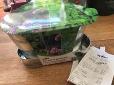 Grow your own kits - various 10p @ Wilko in store