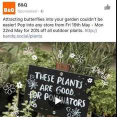 B&Q 20% off all outdoor plants in store  - 19th-22nd May