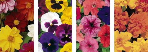 Packs of 9 bedding plants now £1.00 instore @ B&Q