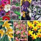 200 Spring Flowering Bulbs - just pay £4.75 P&P @  Thompson & Morgan