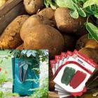 Potato Growing Kit + Seeds £4.45 @ Thompson and Morgan