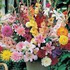 100 Summer Flowering Bulbs for only £4.45 Delivered @ Thompson & Morgan