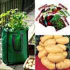 Grow Your Own Seed Potatoes Kit - worth over £15 - £4.45 delivered  @ plantoffers.com