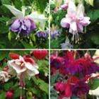 Bestseller Summer Plants Saver Pack was £35.90 - now £13.50 @ Suttons Seeds