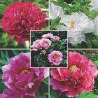 5 different Tree Peonies for £14.99 delivered  @ Thompson & Morgan