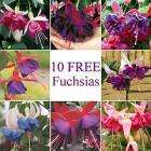 10 Fuschia Plants for £4.45 @ Thompson & Morgan (just paying for P&P)