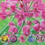 100 Allium Collection £4.50 @ Thompson and Morgan with code
